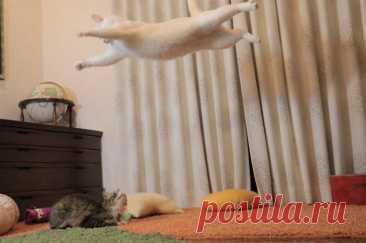 20 котов, у которых была всего секунда, чтобы прославиться. И они воспользовались ею сполна