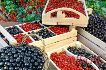 Подбираем плодовые кустарники, которые можно высаживать на участке в августе, сентябре и даже в начале октября.