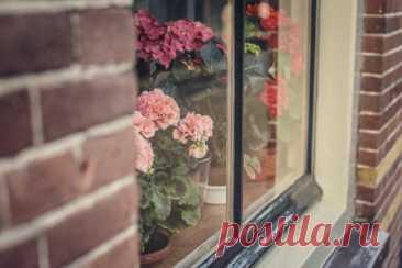 10 советов по обустройству зимнего сада в квартире | Стиль (Огород.ru)