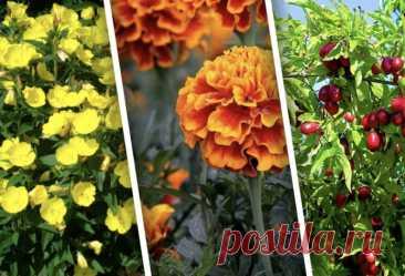 Какие неприхотливые растения посадить на даче? Покажем подборку неприхотливых растений для посадки на даче и расскажем про их особенности.