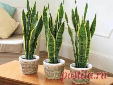 Комнатные растения для слабоосвещенных помещений
