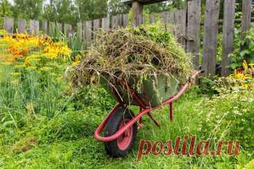5 весомых причин, чтобы бороться с сорняками на участке. Фото — Ботаничка.ru