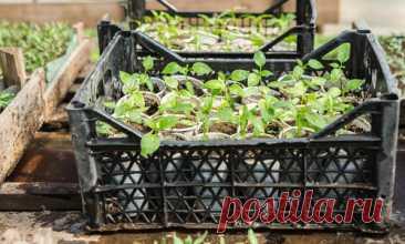 Пластиковые ящики на даче: идеи применения, фото