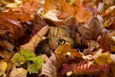 Картинки красивая осень (56 фото) 🔥 Прикольные картинки и юмор