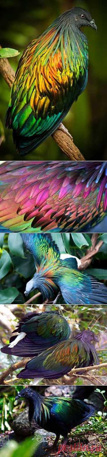 (+1) a subject - Fantastically beautiful bird! | SURPRISING