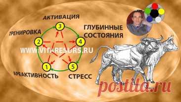 «Все началось с племенных быков-производителей» — как сохранить и приумножить мужскую силу   Игра без правил Алексея Р   Яндекс Дзен