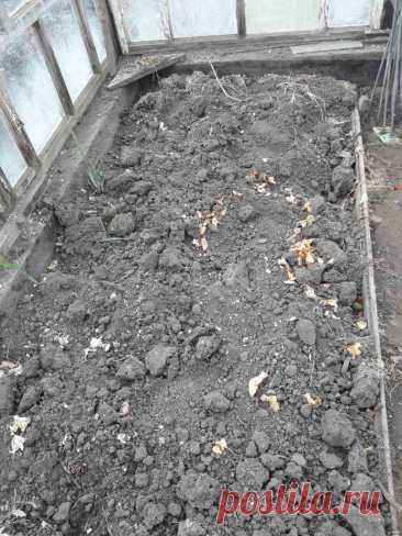 Пошаговая инструкция посадки помидор в теплицу