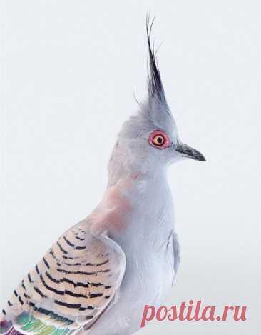 Разнообразие и красота птиц в фотографиях Лейлы Джеффрис
