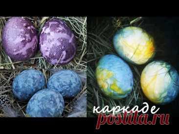 Красим пасхальные яйца чаем каркаде.