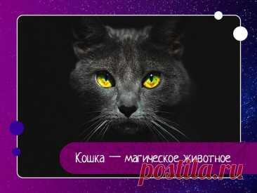 Кошка — одно из самых магических животных на земле.