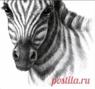 Рисунки животных для срисовки: фото 100 креативных идей