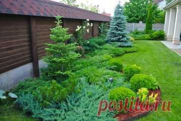 4 mistakes when landing coniferous plants