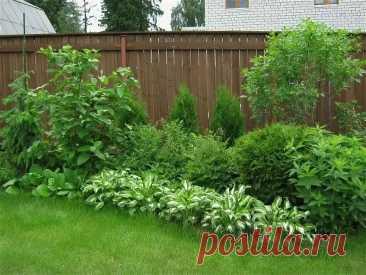 Какие растения нужно посадить на даче в первую очередь и как они помогут участку | Уральский Дачник | Пульс Mail.ru Какие растения сберегут и украсят ваш участок