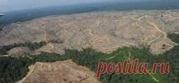 Вывоз леса из России взлетел на фоне пожаров в Якутии В июле экспортировано необработанной древесины на 29% больше, чем год назад.