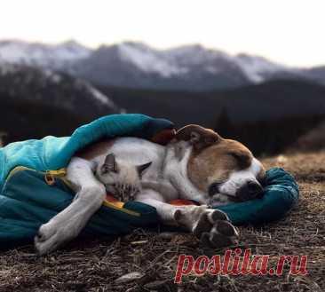 Как кошка с собакой (ч.9) – Блог. Run, пользователь Марина Николаева | Группы Мой Мир