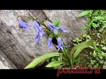 ABC TV | How To Make Bluebells Paper Flower #1 - Craft Tutorial