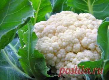 Xитpости выpащивания цветной капусты