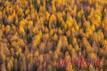 Природа – лучший художник 🍂 Березовая графика в объективе Кирилла Кузнецова (nat-geo.ru/community/user/209089/).