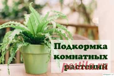 Верный уход за комнатными растениями