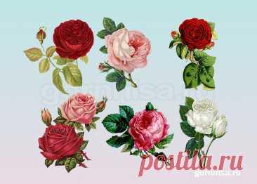 Женский тест на королевские качества - Выберите розу | ГОРНИЦА Женский тест на королевские качества - Выберите розу. Есть определенные качества, которыми обладают королевы. Предлагаем прекрасной половине