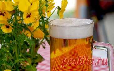 Домашнее пиво без оборудования Рецепт - Журнал полезных советов Домашнее пиво без оборудования Вкусное пиво в домашних условиях простой и быстрый рецепт. Как сварить пиво в домашних условиях без пивоварни?