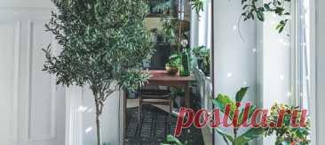 Жизнь в городе по-своему хороша, но порой так хочется чего-то зеленого, цветущего, тропического. Выход простой — завести растение. А лучше несколько! И в этом нет ничего страшного и сложного. Сплошное зеленое счастье. У Андерса Рёйнеберга, который живет в маленькой квартире в Осло, больше сотни растений. Бананы, цитрусовые и оливковые деревья, папоротники, суккуленты и другие товарищи с трудными названиями. Книга Андреса — подробное руководство для тех, кто влюблен в растения, но не очень…