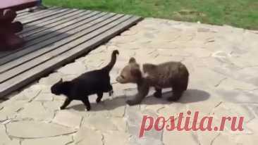 Кот не боится даже медведя))))