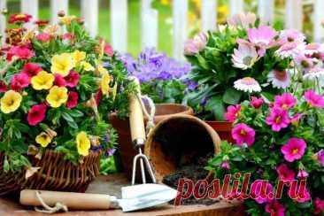 Самые неприхотливые цветы для дачи - фото и названия (каталог) Мы выяснили, какие цветы для дачи самые неприхотливые в уходе и содержании. Каталог цветов с фото, названиями и описаниями!