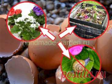 Как использовать яичную скорлупу как удобрение в огороде, саду – варианты применения