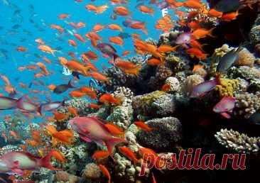 Самые красивые подводные пейзажи