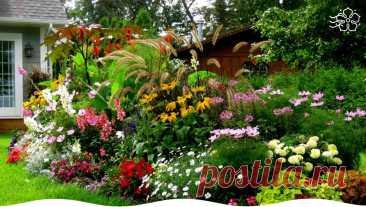 Какие цветы лучше высадить на передний план цветника | Блог компании «Сады России» | Яндекс Дзен