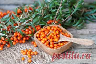 Время укреплять здоровье: в каких продуктах искать витамин C - ПолонСил.ру - социальная сеть здоровья - медиаплатформа МирТесен