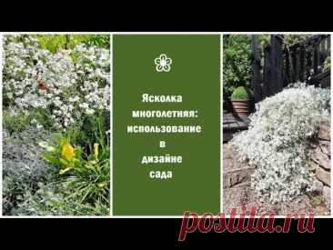 ❀ Ясколка многолетняя: использование в дизайне сада
