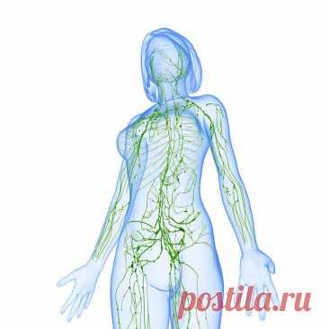 Не допускайте застоя лимфы — это губительно для здоровья Двигаться кровь по артериям заставляет мышечный сосудистый орган — сердце, движение крови по артериям и венам обеспечивается — сердечно клапанным строением, далее строением сосудистой и артериальной системы. Лимфатическое русло не имеет подобного «привода». Движение лимфы медленное и обеспечивается посредством мышц. Главная мышца для... Читай дальше на сайте. Жми подробнее ➡
