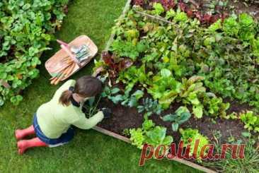 Август - вторая урожайная волна | Огородник Что посадить в августе после сбора урожая. Особенности посадки и ухода.
