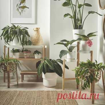 7 комнатных растений, которые вредят здоровью - Я Покупаю