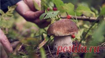 Сбор грибов 2021, срезать или выкручивать, грибные места и прочие советы миколога - Образованная Сова