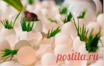 7 растений, которые любят яичную скорлупу – БУДЬ В ТЕМЕ