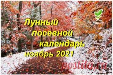 Лунный посевной календарь садоводов, огородников, цветоводов на ноябрь 2020 года (таблица), благоприятные дни | Дачный участок