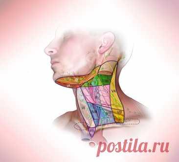 Мышечные зажимы шеи и головы, которые не дают нормально жить Мышечные зажимы в теле формируются по разным причинам. Здесь сочетаются факторы и физического, и психологического плана.
