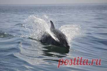 Насколько опасен дельфин в открытом море: вся правда для туристов   Все о туризме и отдыхе