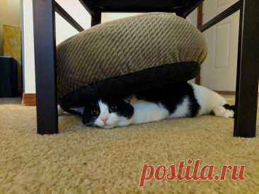 Ridiculous photos of cats and dogs who are not able to use beds
