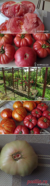 Эль Амар. Томат из Палестины.: Группа Органическое земледелие