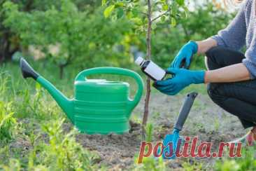 5 способов быстро подкормить деревья и кусты | 6 соток