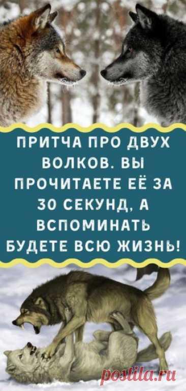 Притча про двух волков. Вы прочитаете её за 30 секунд, а вспоминать будете всю жизнь! - Кулинария, красота, лайфхаки
