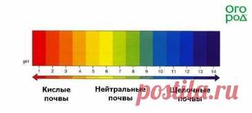 Кислотность почвы: определяем и регулируем | Почва и плодородие (Огород.ru)