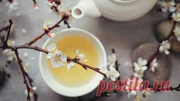 Чем полезен белый чай для женщин? - блог пользователя Swjournal Ru - медиаплатформа МирТесен И в этом нет ничего удивительного, поскольку листочки собирают с куста определенного сорта рано-рано утром всего дважды в году: в апреле и сентябре. Для сбора подходят самые верхние почки у молодых побегов, покрытые мягкими белыми ворсинками. Именно они – знак того, что чай качественный и собран с