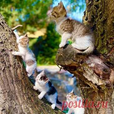 Photo by Котята даром Алматы on September 14, 2021. May be an image of cat, outdoors and tree.