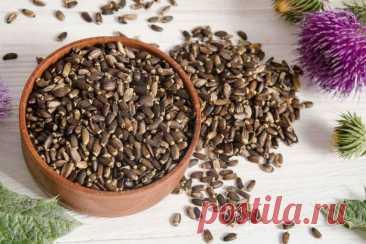 Расторопша для похудения: отзывы, инструкция по применению, как принимать, шрот, полезные свойства, семена, масло, таблетки, капсулы