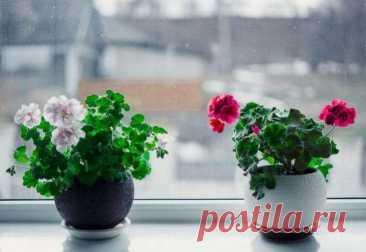 Перекись водорода для комнатных цветов — бальзам в холодное время года Перекись водорода для комнатных цветов Благодаря этому уникальному раствору, цветы будут цвести, и пахнуть даже в самые холодные дни. Осушенный воздух, который получается путем обогрева центральным отоплением в квартирах и домах, отсутствие необходимого достаточного количества дневного света, приводят к замедлению процесса... Читай дальше на сайте. Жми подробнее ➡